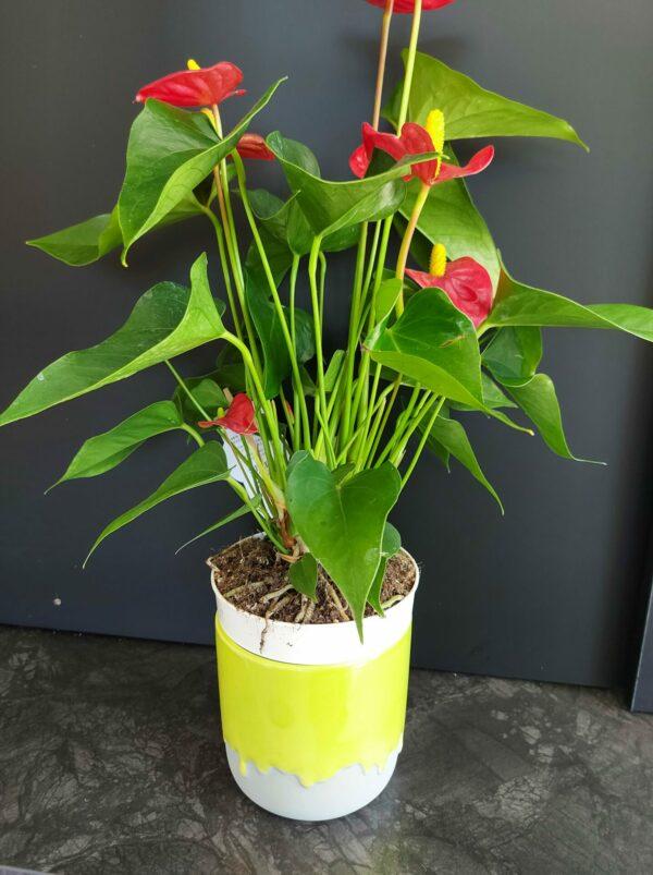 plantenpot